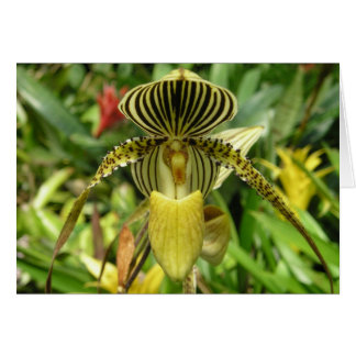 Yellow Orchid Flower Card