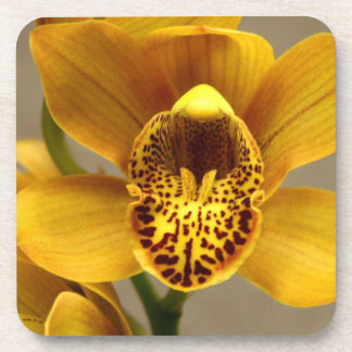 Yellow Orchid Flowers Drink Coaster