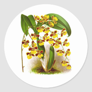 Yellow Orchid Flowers no. 6 Tropical Home Decor Classic Round Sticker