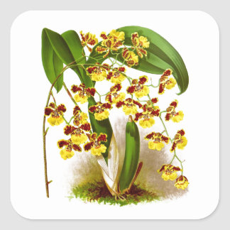 Yellow Orchid Flowers no. 6 Tropical Home Decor Square Sticker