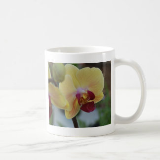 Yellow Orchid from Gardenfest 2011 Coffee Mug