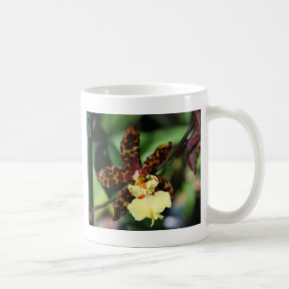 Yellow Orchid from Vero Beach, FL Coffee Mug
