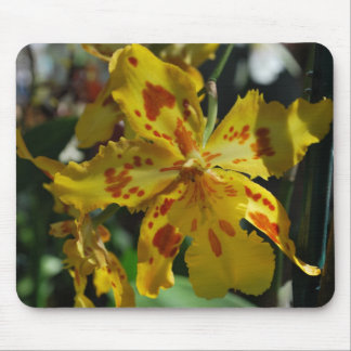 Yellow orchid from Vero Beach Mouse Pad