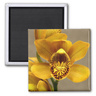 Yellow Orchid magnet