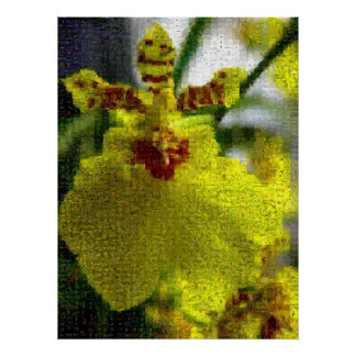 Yellow Orchid Montage Poster