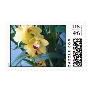Yellow orchid postage stamp