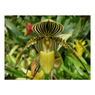 Yellow Orchid with Zebra Stripes Pattern Print
