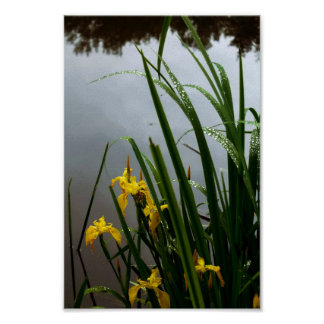 Yellow orchids by the lake poster