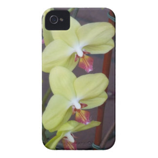 Yellow Orchids Case-Mate iPhone 4 Case
