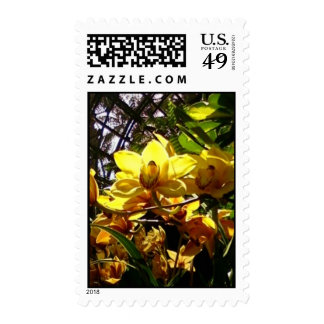 Yellow Orchids Stamps