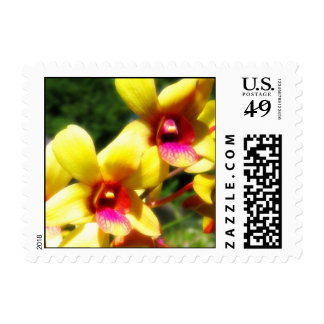 Yellow Orchids Postage Stamp