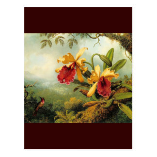 Yellow Orchids Postcard