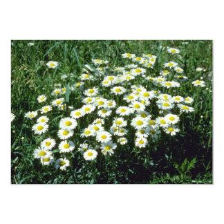Yellow Ox-Eye-Daisy (Leucanthemum Vulgare) flowers 5x7 Paper Invitation Card