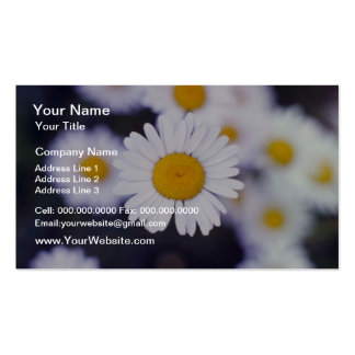 Yellow Ox-Eye Daisy (Leucanthemum Vulgare) flowers Double-Sided Standard Business Cards (Pack Of 100)