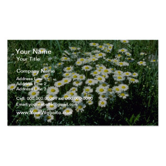 Yellow Ox-Eye-Daisy (Leucanthemum Vulgare) flowers Double-Sided Standard Business Cards (Pack Of 100)