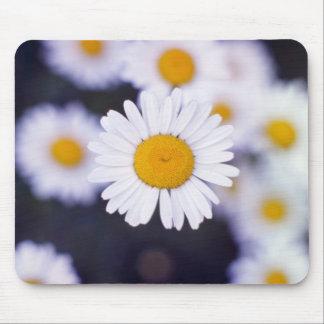 Yellow Ox-Eye Daisy (Leucanthemum Vulgare) flowers Mouse Pad