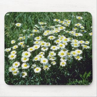 Yellow Ox-Eye-Daisy (Leucanthemum Vulgare) flowers Mouse Pad