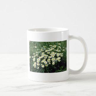 Yellow Ox-Eye-Daisy (Leucanthemum Vulgare) flowers Classic White Coffee Mug