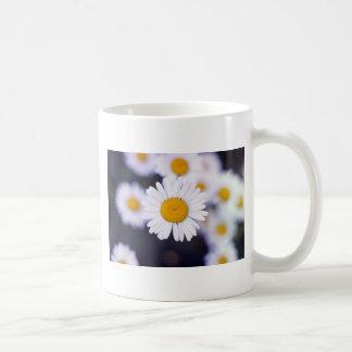 Yellow Ox-Eye Daisy (Leucanthemum Vulgare) flowers Classic White Coffee Mug