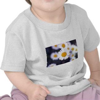 Yellow Ox-Eye Daisy (Leucanthemum Vulgare) flowers T-shirt