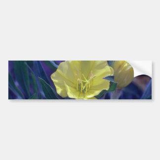 yellow Ozark Sundrops Oenothera Macrocarpa flow Bumper Sticker