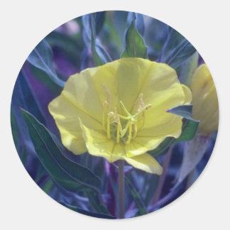 yellow Ozark Sundrops, (Oenothera Macrocarpa) flow Classic Round Sticker