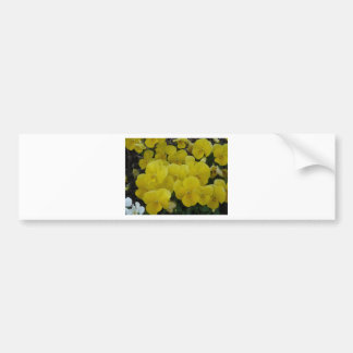 yellow pansies bumper sticker