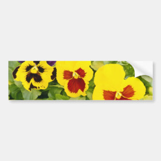 yellow Pansies flowers Bumper Stickers