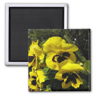 Yellow Pansies Magnet