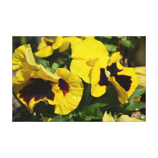 Yellow pansies photo by apollo canvas prints