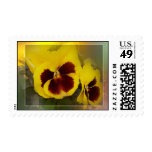 yellow pansies postage stamps