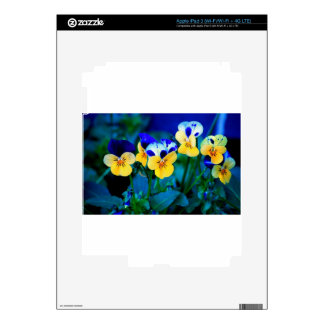 Yellow Pansies Skins For iPad 3