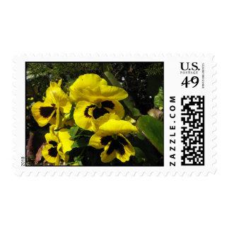 Yellow Pansies Stamp