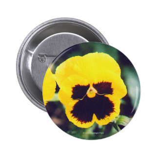 Yellow Pansy 2 Inch Round Button