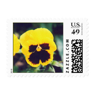 Yellow Pansy Postage