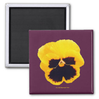 Yellow Pansy Purple 2 Inch Square Magnet
