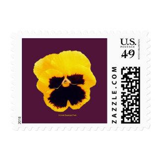 Yellow Pansy Purple Postage