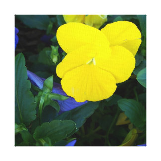 Yellow Pansy Spring Flowers Floral Canvas Art Canvas Print