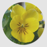 Yellow Pansy Sticker