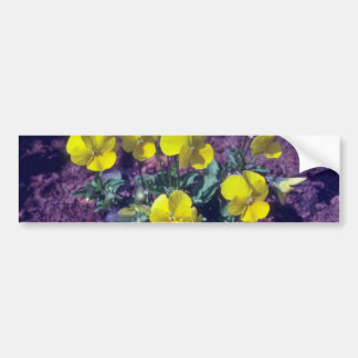 yellow Pansy Viola flowers Bumper Sticker