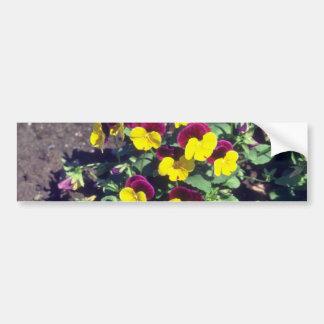 yellow Pansy (Viola) flowers Bumper Sticker
