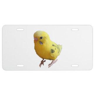Yellow Parakeet Budgie Photograph License Plate