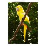 Yellow Parrot Card