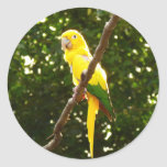 Yellow Parrot Classic Round Sticker