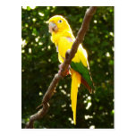 Yellow Parrot Postcard