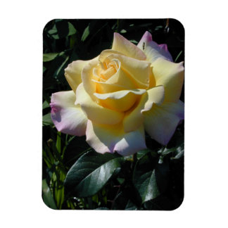 Yellow Peace Rose - Garden Beauty Rectangular Photo Magnet