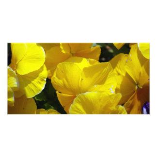 Yellow-petals529 YELLOW PANSIES FLOWERS PHOTOGRAPH Card