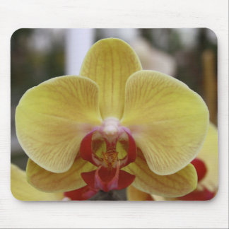 YELLOW PHALAENOPSIS ORCHID MOUSE PAD
