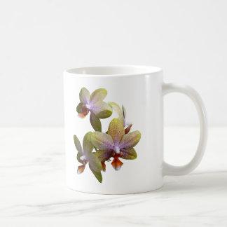 Yellow Phalaenopsis Orchids Mug