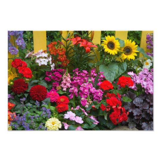 Yellow picket fence with flower garden in photo print